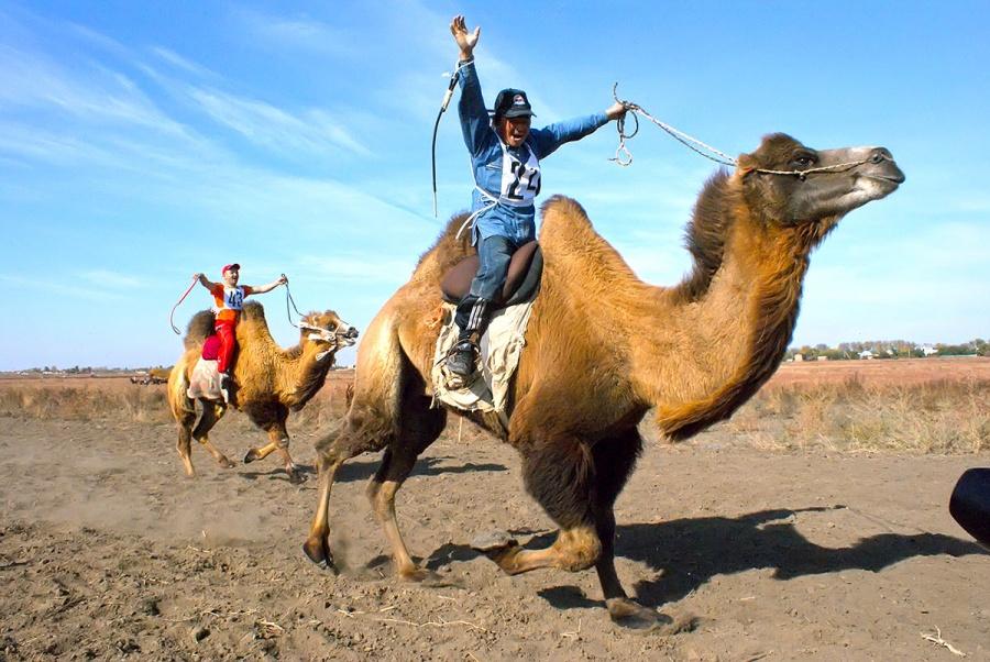 картинка верблюда и человека линия